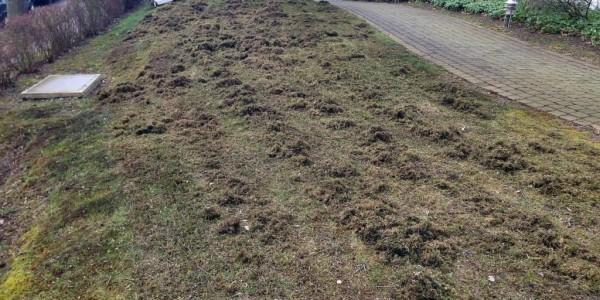 Tag. 1: Moos aus dem Rasen entfernen