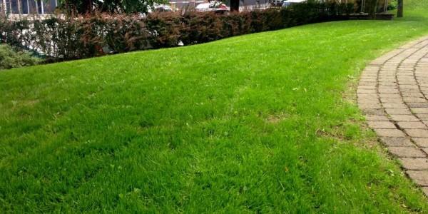 Tag 32: erster Schnitt der Rasenfläche