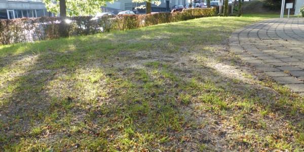 Tag 14: erste feiner Rasen sichtbar